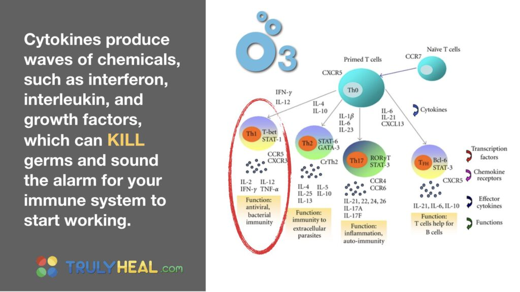 ozone vitaminC.011