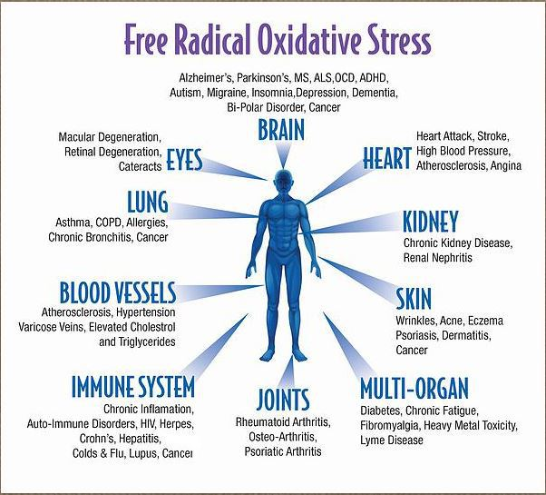 free radical oxidative stress